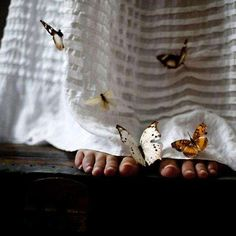 Serene Butterfly Photography