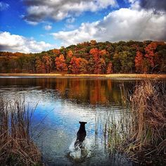 Fetch! October scenes at Mendon Ponds Park shared by @xeyedcat #ThisIsROC