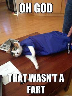 Bag Cat gambled and lost
