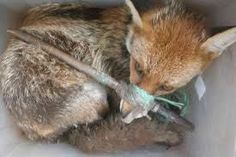 The poor old RSPCA is in the news again, once more over the private prosecutions that it brings. Its mission statement:The RSPCA as a charity will, by all lawful means, prevent cruelty, promote ki…