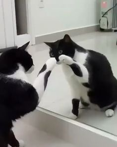 How Cute Cat acting is funny video - Gatos - Animal Funny Animal Videos, Cute Funny Animals, Cute Baby Animals, Funny Dogs, Animals And Pets, Funny Humor, Cats Humor, Cat Memes, Funny Horses
