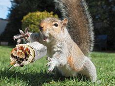 squirrelburrito2