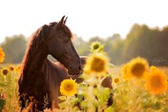Black Beauty and the sunflowers by Kerstin Benz  on 500px
