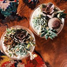 The shop is filled with pretty plantings and burl wood tables. Come check them out!  #shoppigment #prettyplanting #oneofakind #succulents