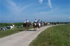 A group of equestrians enjoy the Lake Okeechobee Scenic Trail.