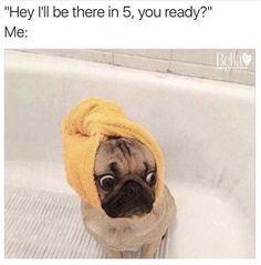 All pets are created equally, but some memes are funnier than others.All pets are created equally, but some memes are funnier than others. 100 Memes, Funny Memes, Hilarious, Funny Quotes, Animal Memes, Funny Animals, Dog Facts, Dog Shower, Struggle Is Real
