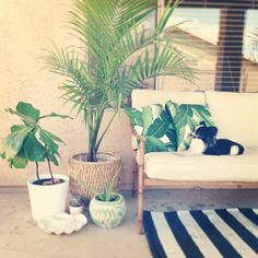 Love the simplicity. White, rattan and pops of green.