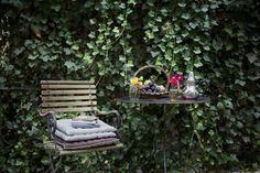 Simple garden pleasures #flowers #outside