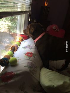 She likes to put all her balls here in a row so she can be near them when she looks out the window