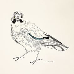Blue Jay drawn in pen and coloured with ink Sketches, Drawings, Painting, Illustration Art, Ink Drawing, Art, Ink, Humanoid Sketch, Color