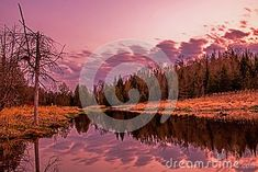 Photo about Even long exposure image above the beaver dam on Pine River in Ontario, Canada. Image of pine, blue, reflection - 116201605 Ontario, Beaver Dam, Long Exposure, Pond, Reflection, River, Celestial, Image, Outdoor