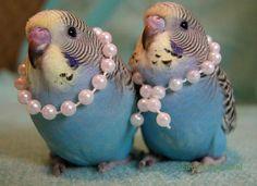 My birds need these! LOL