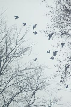 The disappearance of the birds was the first sign that something was wrong in the tiny village of Dumra Talea.