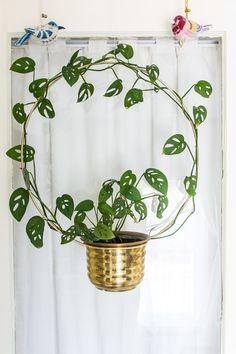 so beautiful . let's green it ?Mention your friends who love plants ? so beautiful . let's green it ?Mention your friends who love plants ? Green It, House Plants Decor, Plant Decor, House Plant Care, Plants Are Friends, Plant Shelves, Garden Accessories, Outdoor Plants, Green Plants
