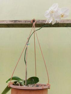 Bulan Flower #home #garden #flower