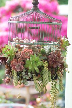 succulent wedding - brides of adelaide magazine - succulent chandelier The Poteet Loft Porch birdcage planter for succulents Cactus helps to detox air in the house... Cute way to decorate with a harsh plant!