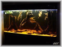 Amazon black water aquarium