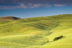 :) Hills of Barley: San Quirico d'Orcia, Italy