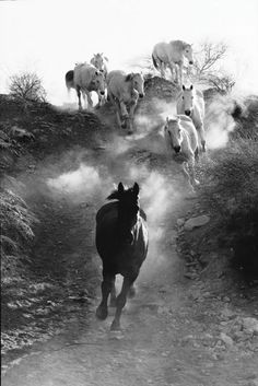 you can almost hear the pounding of their hooves - just close your eyes and listen . . .