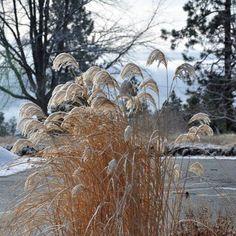 Summerland Ornamental Gardens in winter...Summerland, BC