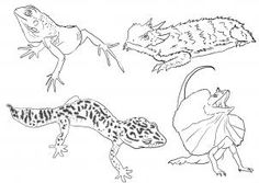 how to draw lizards step 5