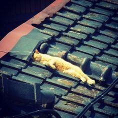 cat on a blue tile roof