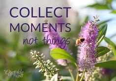 Daily Quote - Collect moments not things. #quotes #lifequotes #bestquotes #bees