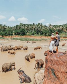 Overlooking elephants in Sri Lanka with a loved one. This is the travel dream. Beautiful travel photography too!