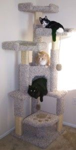 Unique Cat Tree House review at Kaboodle
