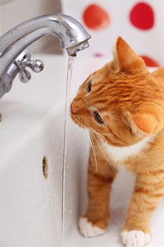 How to tell if your cat is drinking enough and what to do about it.