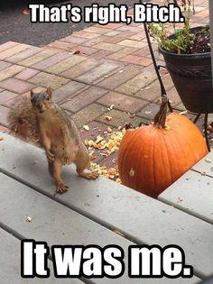 Who broke the Pumpkin?