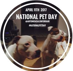 On #April11th 🐶  #PetLovers    nationwide 🇺🇸 celebrate🐱     #NationalPetDay  🐰.On this #TransformationalTuesday  the #42ndDayOfLent  ⛪️ #DontGiveUpGoodHairForLent 👸🏻treat yourself to a  #GiftCard  💳 or  #GiftCertificate  🎫 for a 🌷  #EasterMakeOver 💐 and be 👒  #ReadyForEverythingEaster  🐇 on  #EasterDay  🐥