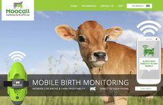 Moocall – World's First Irish-designed Sensor Tells farmer when a Cow is ready to Calve | Irish Tech News