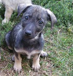 Koblenz: Donnie 4 Monate alter Bub liebt Kinder menschenbezogen verträglich mit Hunden und Katzen