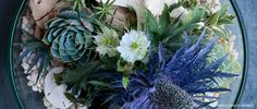 Lila B Design - indoor and outdoor plant / floral arrangements for the home (based in the Mission SF)