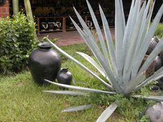 Cerámica negra de Oaxaca