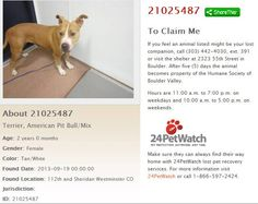 ##CoFlood #COPets FOUND DOG: Female Pitbull mix in Westminster near 112th & Sheridan. Taken 9/19 to Boulder Valley Humane Society ID #21025487