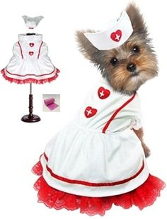 Classic Sweetheart Nurse Uniform and Hat Costume with bags set - in Dog sizes XS thru L * Click on the image for additional details. (This is an affiliate link and I receive a commission for the sales)
