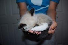 cat sleeping, adorable, cute cute cute