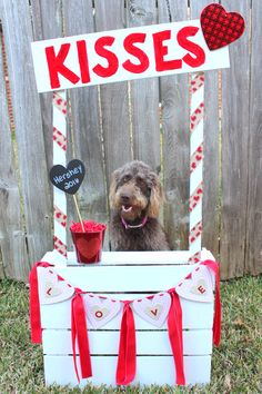 Kissing Booth for Dogs