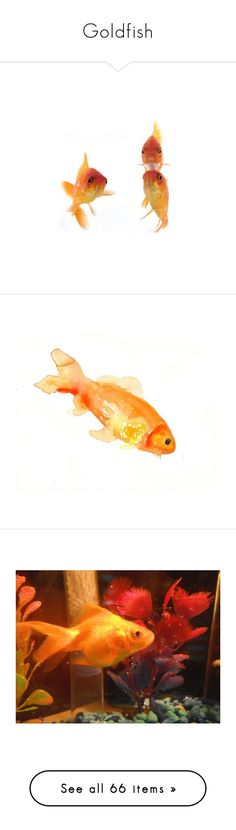 """""""Goldfish"""" by heidibartholdy ❤ liked on Polyvore featuring animals, fish, backgrounds, goldfish, misc, filler, sealife, animals - fish, accessories and pets"""