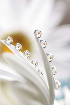 ภเгคк ค๓๏ Water Drop Photography, Micro Photography, Rain Photography, Artistic Photography, Dew Drops, Rain Drops, Drip Drop, Fotografia Macro, Macro Flower