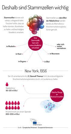 Infografik: Stammzellen spenden - Leben retten