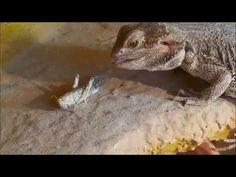 Reptile Attack