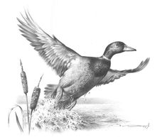 Mallard Duck Study by denismayerjr on DeviantArt - Modern Realistic Pencil Drawings, Bird Drawings, Animal Drawings, Duck Hunting Tattoos, Duck Tattoos, Hunting Decal, Hunting Art, Animal Sketches, Art Sketches