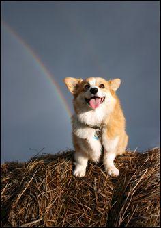 Corgi and rainbow!
