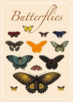 butterflies: vintage illustration and whimsy