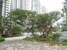 아파트 배롱나무 - Google 검색