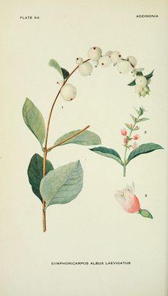 No te pierdas las láminas de botánica gratis de Biodiversity Heritage Libray,