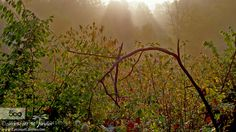 Light and Mist by staylorphd #fadighanemmd